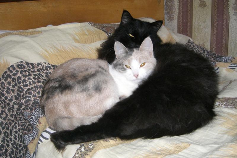 Можно ли коту давать ряженку