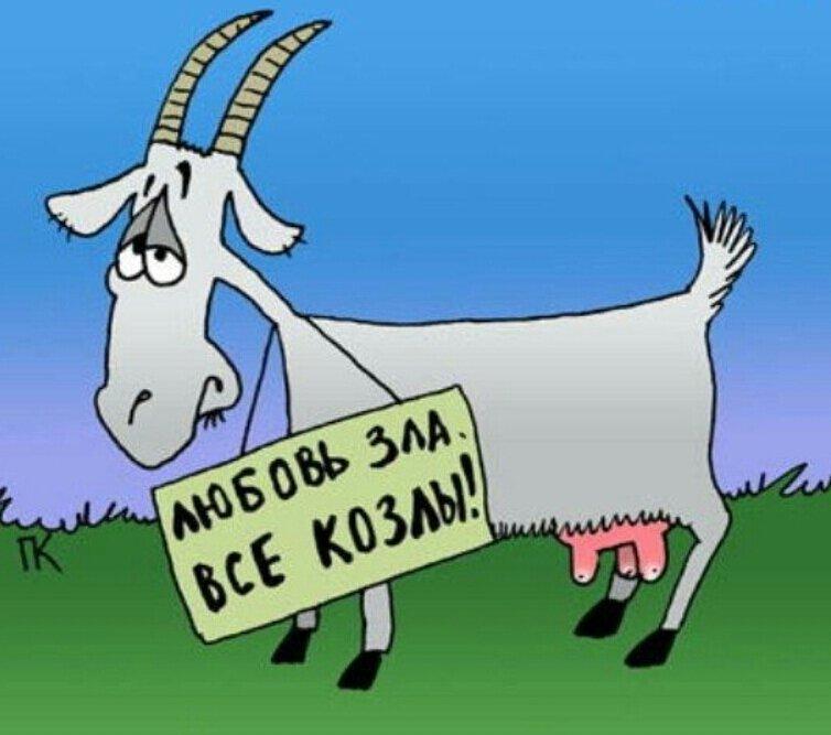 Коза рисунки смешные