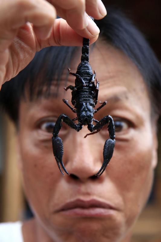 Вредные и противные скорпионы смешные картинки