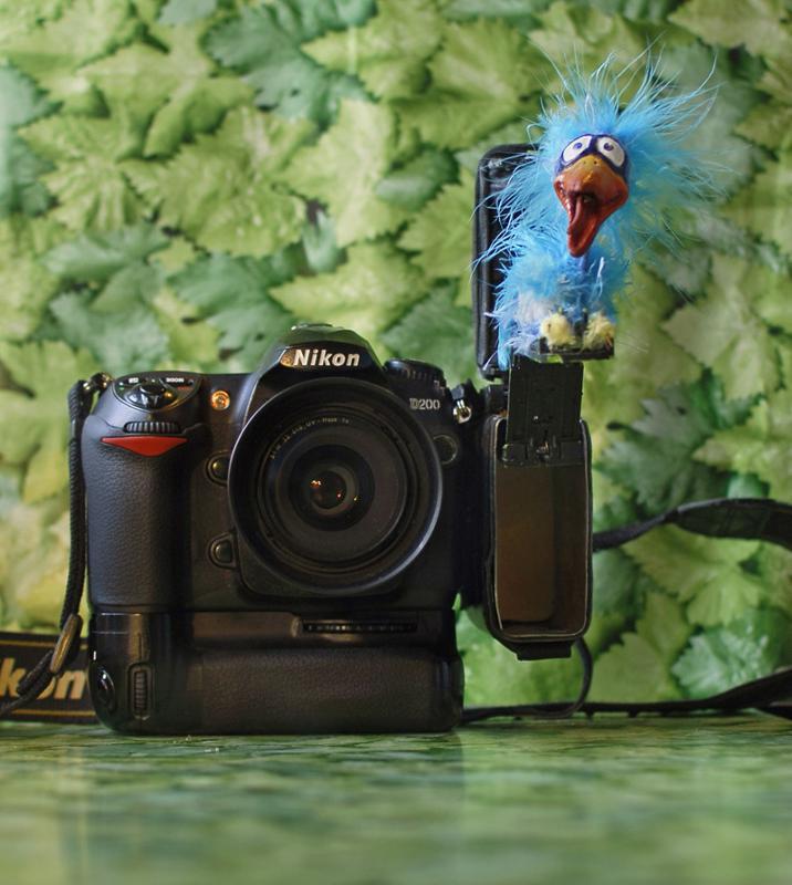 камера для фотографирования птичек начавшаяся стихия повлекла