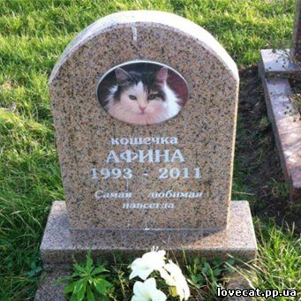 ночь где в москве похоронить кошку Основные размеры