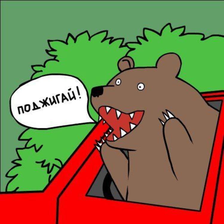 Шлюха картинка медведя