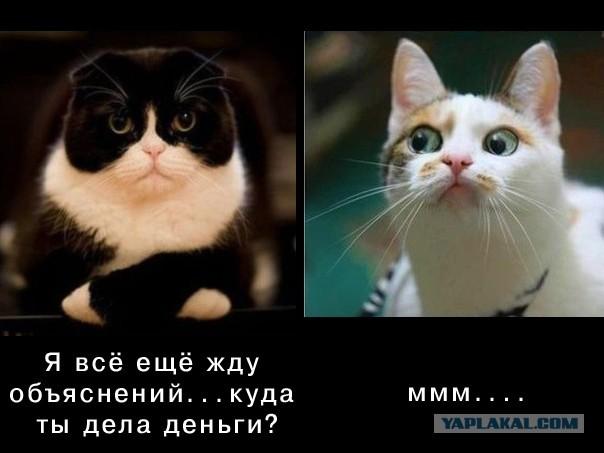 Фото кошки куда деньги дела