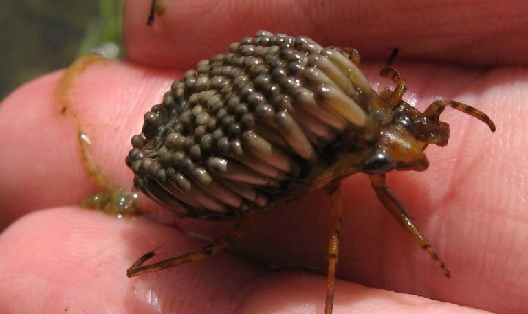 тараканы пока есть руки ноги истории
