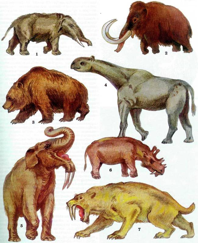 Картинки как появились животные