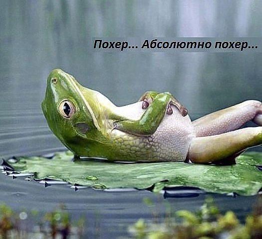 https://otvet.imgsmail.ru/download/u_bf4e471f5ad6cf9867745a9011ec16a1_800.jpg