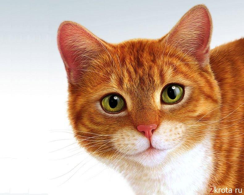 легенды о котах
