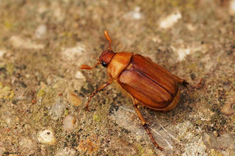 крупные земляные жуки фото и названия размещенных этой