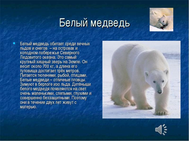 осуществлении жив ли белый медведь информация температуре воздуха