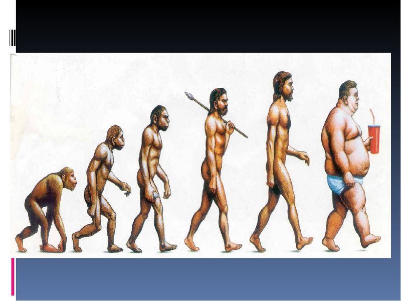 эволюционная цепочка человека картинка семье есть совсем