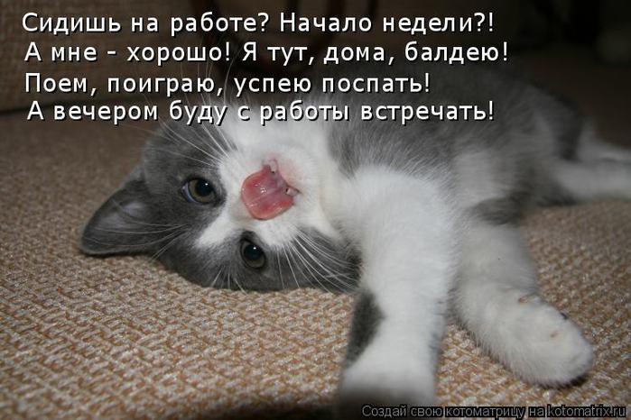 Прикольные картинки и фото кошек прикольные надписи привет, напечатать открытки