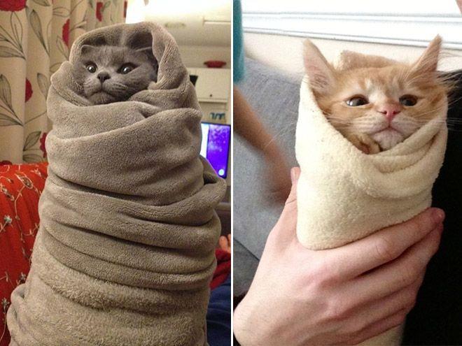 фото шаурмы с котятами #3