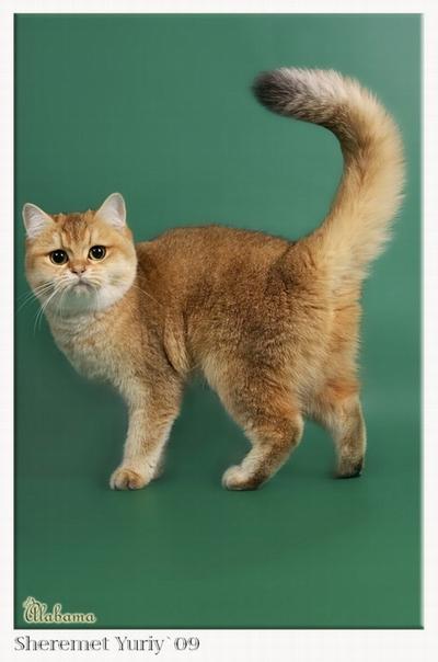 cat spraying after spaying