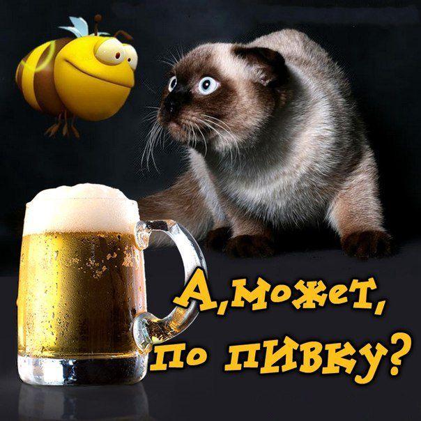Шаблоны для, пить пиво открытки