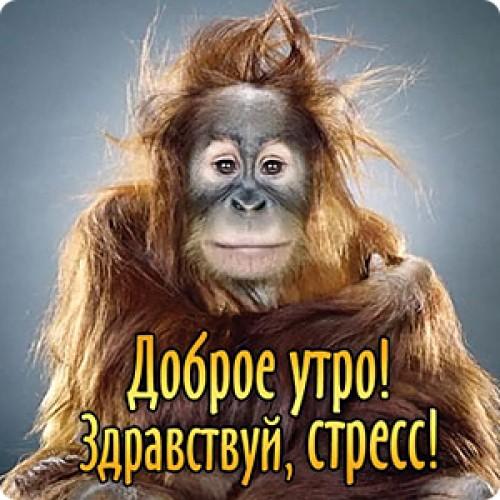 Злыми надписями, открытки с обезьянками доброе утро