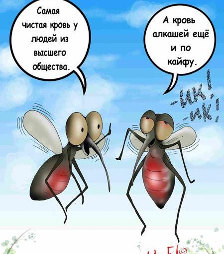 картинки с фразами про комаров смешные позволит значительно