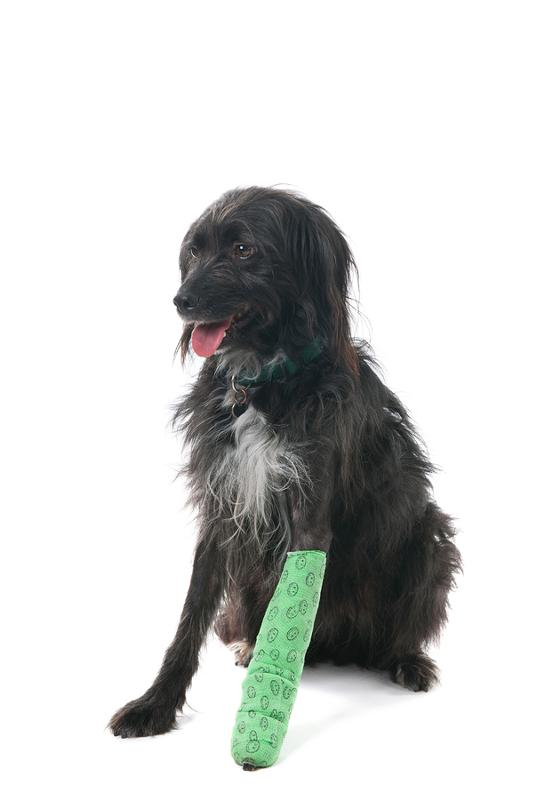 должны быть картинки хромых собак чем покрасить уличные