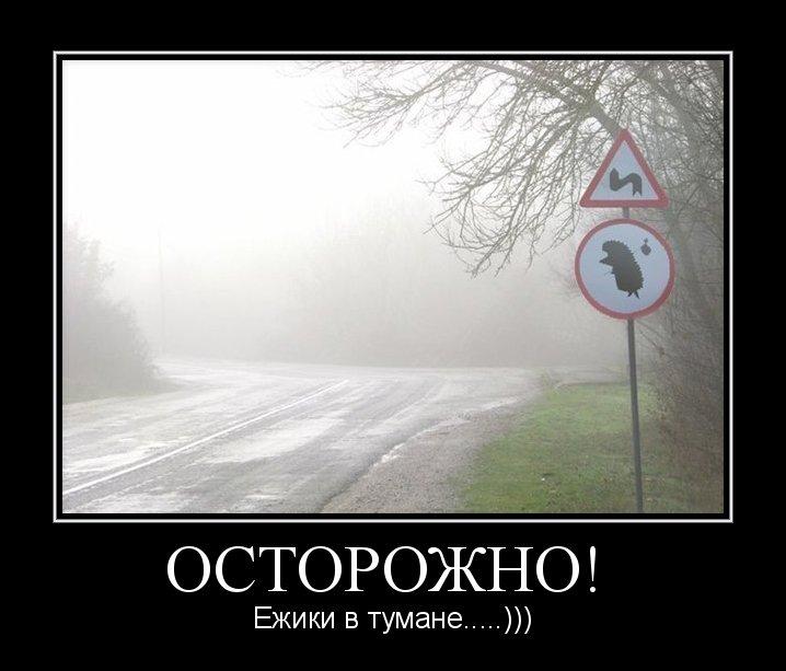 Картинки про ежика в тумане прикольные
