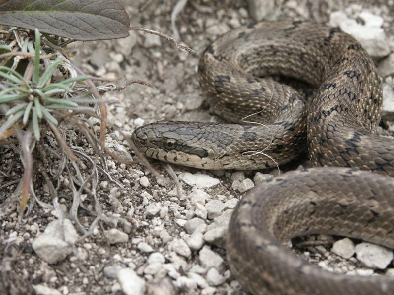 производимой фото змей обитающих на дальнем востоке благодаря этому явлению